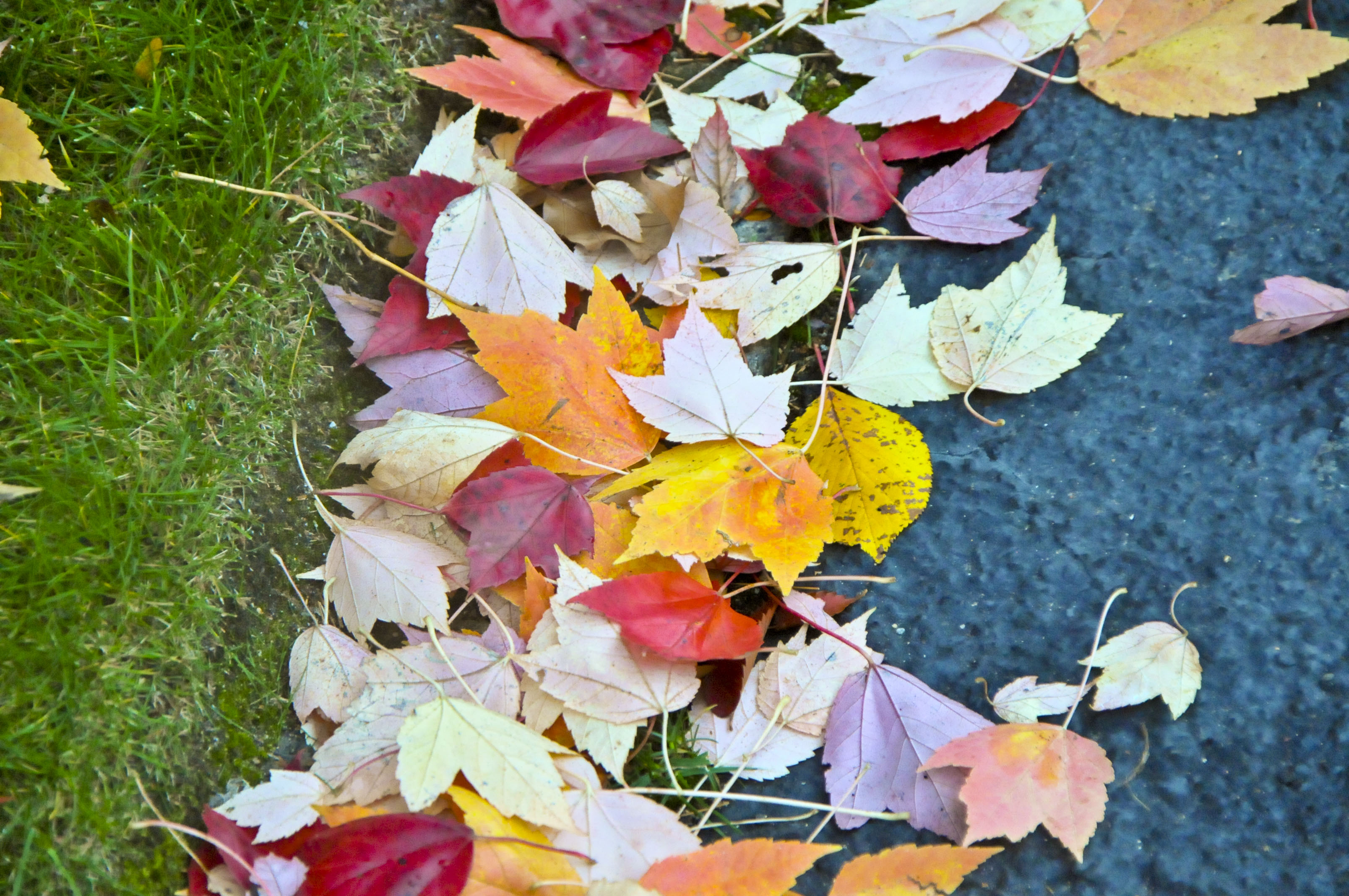 Let kids get bored, collect leaves, make their own fun