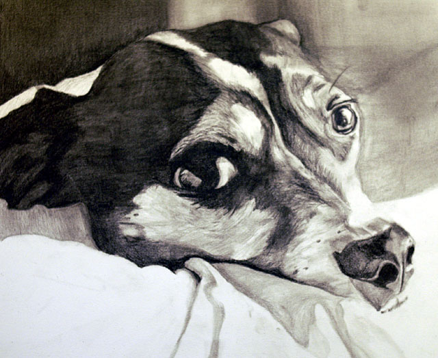 Toy Fox Terrier Drawing by Stephanie Klein